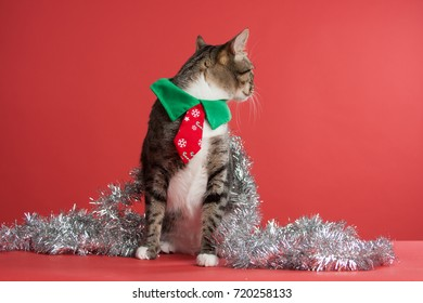 Grey Tabby Cat playing in Christmas garland on a red background facing right