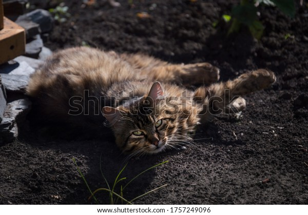 grey-tabby-fluffy-street-cat-600w-175724