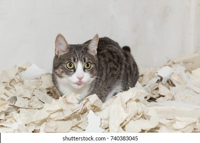 grey tiger cat sitting in rest of wallpaper
