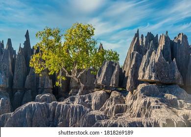 Grey Tsingy Peaks in Bemaraha National Park, Madagascar