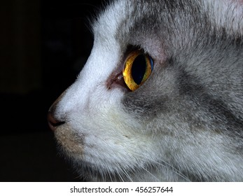 Grey and White Cat Profile - Eye and Face