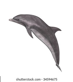 A grey and white dolphin