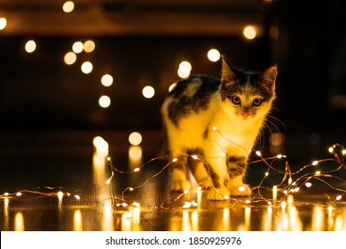 Grey and white kitten looking in the camera with warm diode garland lights around