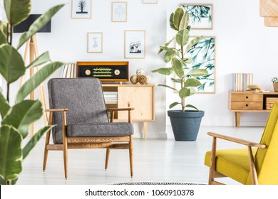 Grey wooden armchair against ficus and radio on cupboard in retro living room interior - Shutterstock ID 1060910378