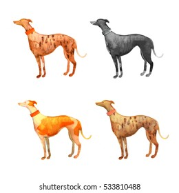 Greyhound dog hand drawn ink watercolor painted illustration. Hand Painted Animals Pets Illustration isolated on white background