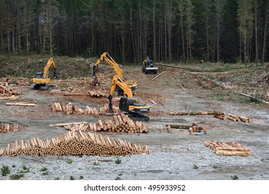 GREYMOUTH, NEW ZEALAND, AUGUST 31, 2016: The skidder brings more logs to a milling site in exotic forest on the West Coast, New Zealand