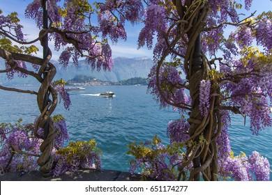 Griante-Tremezzo, Lake Como Italy