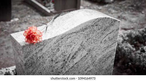 Grief at cemetery / Red carnation on gravestone / Tombstone