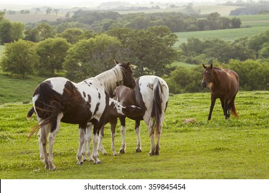 Grieving mare protecting dead colt while other horses want to investigate