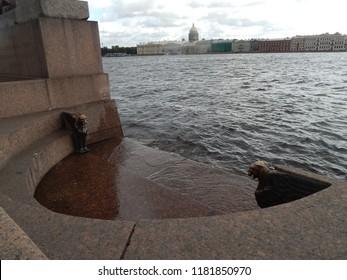 Griffins in St. Petersburg, Vasilievsky Island