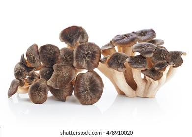 Grifola frondosa, Sheep's Head mushroom (maitake mushroom) isolated on white background.