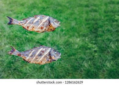 grill from a dorado fish