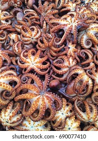 Grilled baby octopus, it can be served whole or sliced, hot or cold with sauce.
