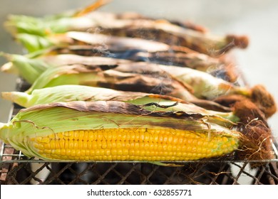 Grilled corn on the hot stove