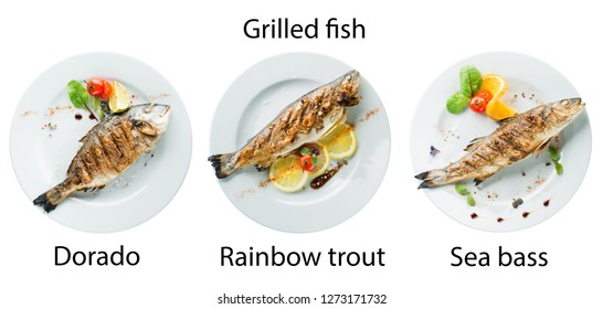 grilled fish set in a restaurant 1) Dorado, 2) Rainbow trout 3) sea bass isolated on white background