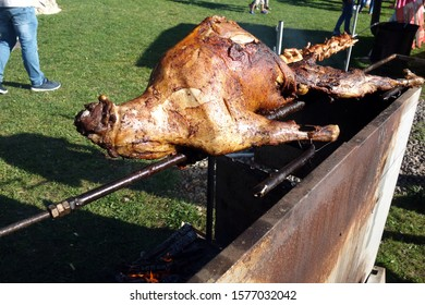 Grilled lamb on a spit in nature
