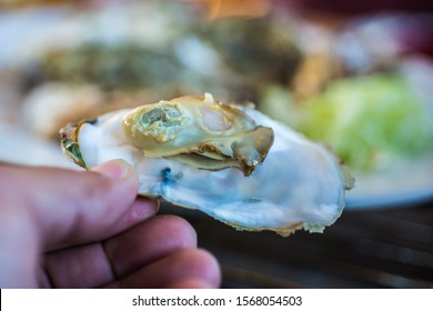 Grilled Oysters ready to eat with blur background