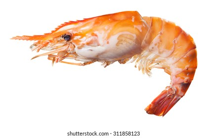 Grilled river shrimp isolated