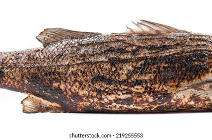 Grilled seabass on plate. Isolated on a white background.