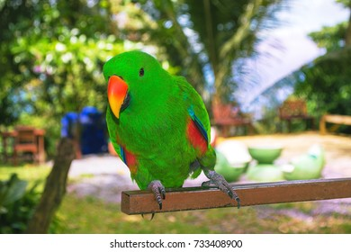 Grin Parrot in the Park, Bird Park in the Tropical Country