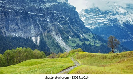 From Grindelwald in Bernese Alps: Alpine Meadows and the Eiger