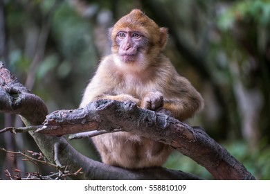 A grinning infant monkey sitting on a branch
