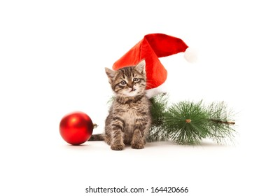 Grinning kitten with Christmas decorations