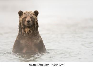 Grizzly Bear (Ursus arctos) - Well I Never