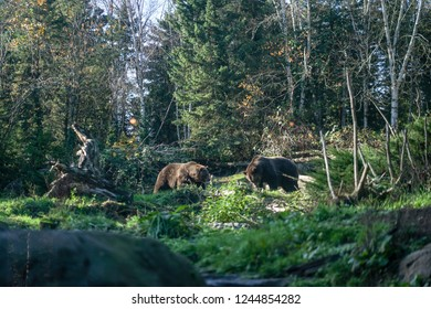Woodland Park Zoo Images Stock Photos Vectors Shutterstock