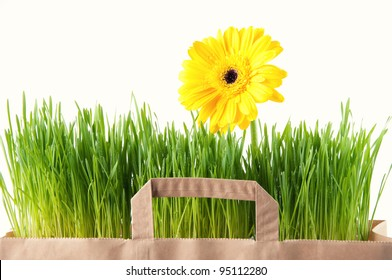 Grocery paper bag with Gerbera and green grass, isolated over white