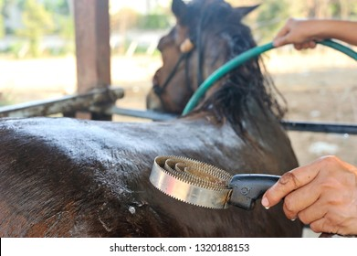 Groom cleans horse with a curry comb in bath time, selective focus.