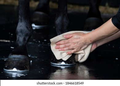 A groom washing hoofs and legs of horse in shower after training
