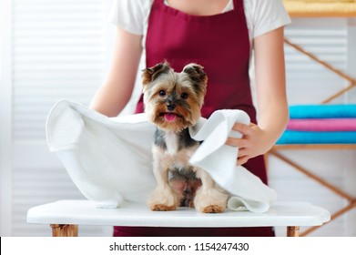 Groomer wrapping the dog in a towel after bathing