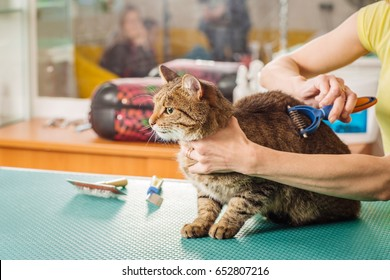 Grooming cat with tool for shedding hair. medicine, pet, animals, health care and people concept