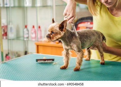 Grooming dog with tool for shedding hair. medicine, pet, animals, health care and people concept