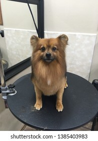 grooming dogs professional beautiful breed