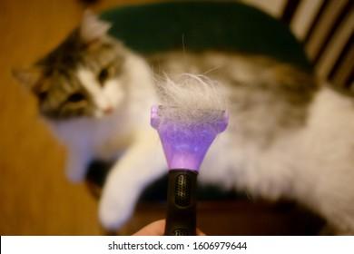 grooming domestic cat with furminator closeup view