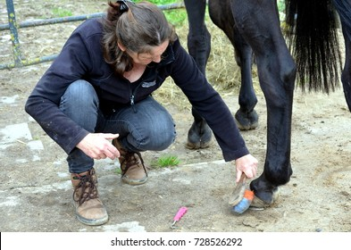 Grooming her Trakehner purebred horse