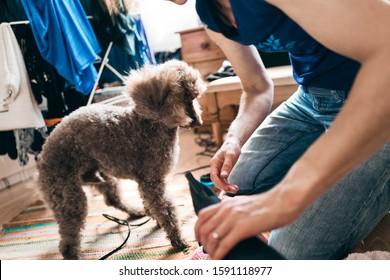 Grooming time for a pet dog as he's being brushed and blowdried after his bath and before having a haircut.
