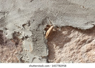 A Gross hopper Sitting On Wall