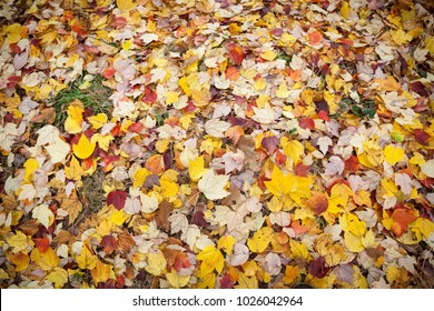 Ground covered in yellow autumn leaves.