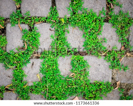 Grass background tile Animated Grass Background Tile Grass Texture Ground With Grass Pavement Sidewalk Tile Background Pavement Tile Top View Grass Background Tile Forooshinocom Is Great Content Grass Background Tile Green Grass 198 Of 200 Photosets Grass Lawn