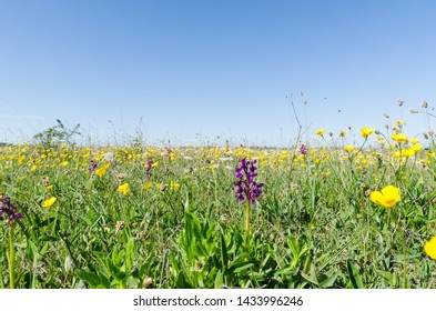 Ground level image of a flowery field with wild growing flowers in spring season at the swedish island Oland