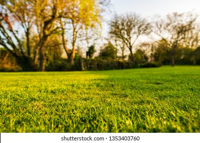 Ground level, shallow focus view of a newly cut, well maintained garden lawn seen just before dusk. The background shows a large willow tree situated next to a large pond.