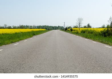 Ground level view of an asphalt road with rapeseed fields by roadside at the island Oland in Sweden