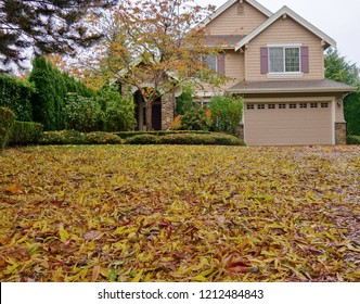 Ground level view of autumn leaves all over yard & driveway of 2 story house in background. Some overhanging branches upper left, fallen leaves on bushes in front of house & tree with some fall colors