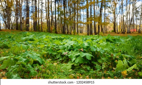 Ground Level View of Green Plants and Fall Forest at Sunny Day in September, Shallow Depth of Field