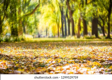 Ground level view on Central Park in Manhattan New York City with trees at alley, with blurry background and fallen foliage leaves on ground