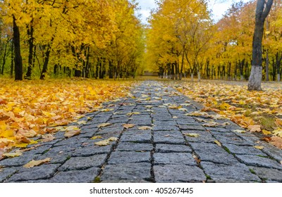 Ground level view on empty stone sidewalk littered with beautiful yellow maple tree leaves covering grass on either side