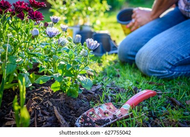 Ground level view of woman planting flowers in sunlight